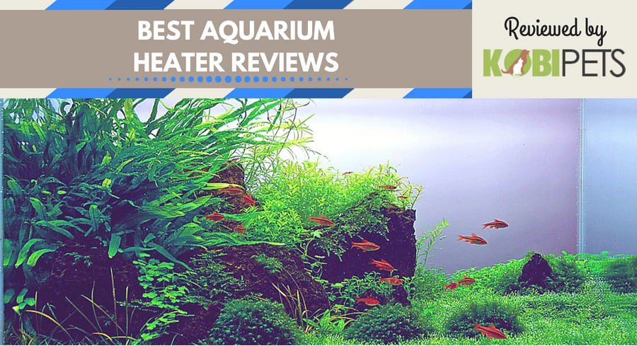 best aquarium heaters - featured img