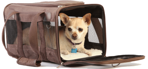 dog in sherpa pet carrier