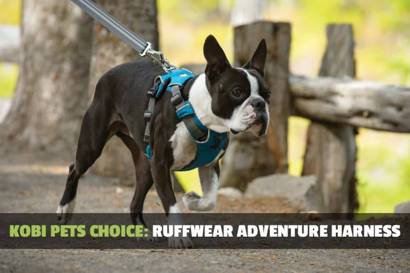 dog strap we recommend - ruffwear adventure
