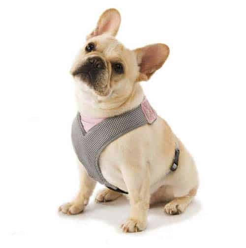 frenchy in overhead dog harness