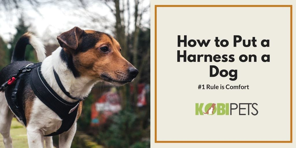 how to put a harness on a dog - featured image