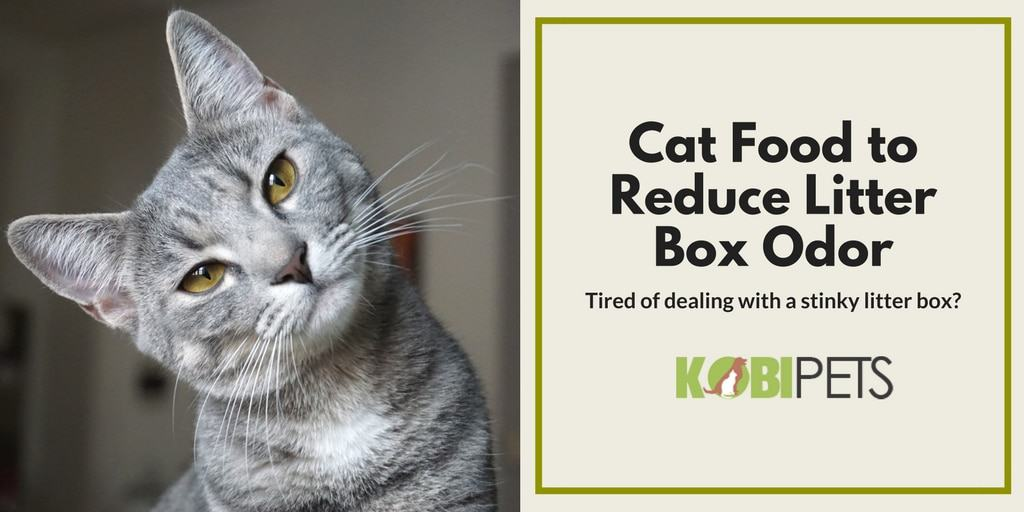 Cat Food to Reduce Litter Box Odors - Featured Image