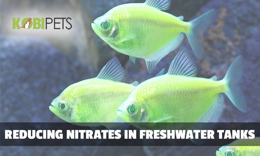 how to lower nitrates in freshwater aquarium kobi pets answers