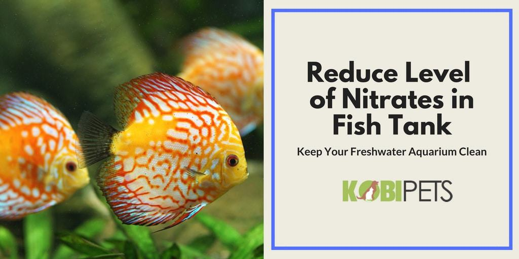 How to Reduce and Control Level of Nitrates in Fish Tank - Featured Image