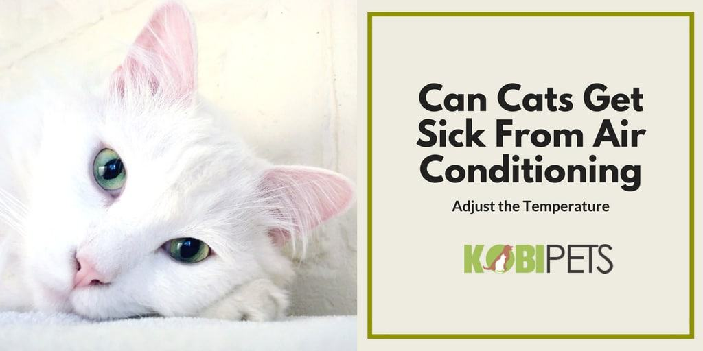 can cats get sick from ac - Featured Image