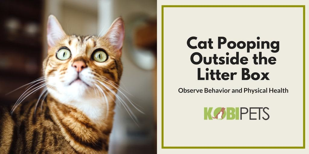 cat pooping outside litter box - Featured Image