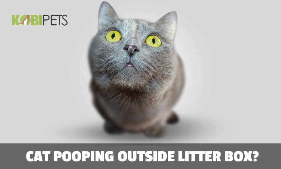 Why is My Cat Suddenly Pooping Outside the Litter Box?