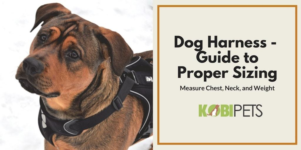 dog harness sizing guide - featured image