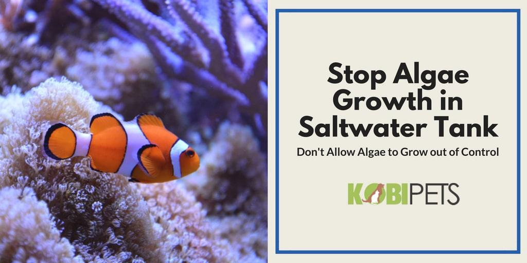 how to stop algae growth in saltwater aquarium - Featured Image