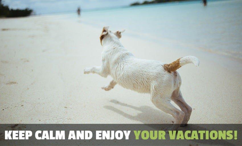 image of a dog enjoying a summer