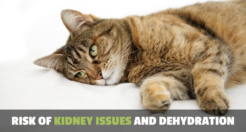 image of cat suffering from chronic kidney disease