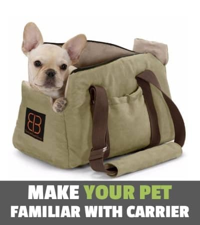 image of french bulldog in the pet carrier