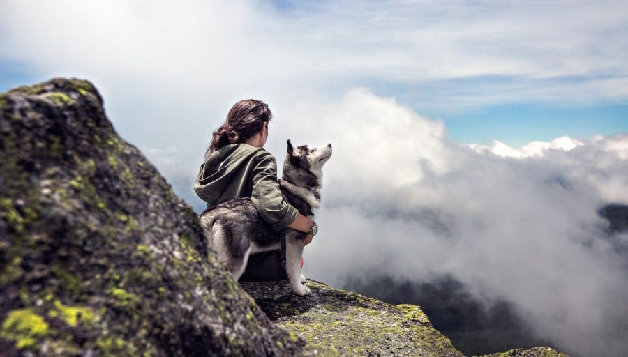 image of husky and his owner enjoying the view