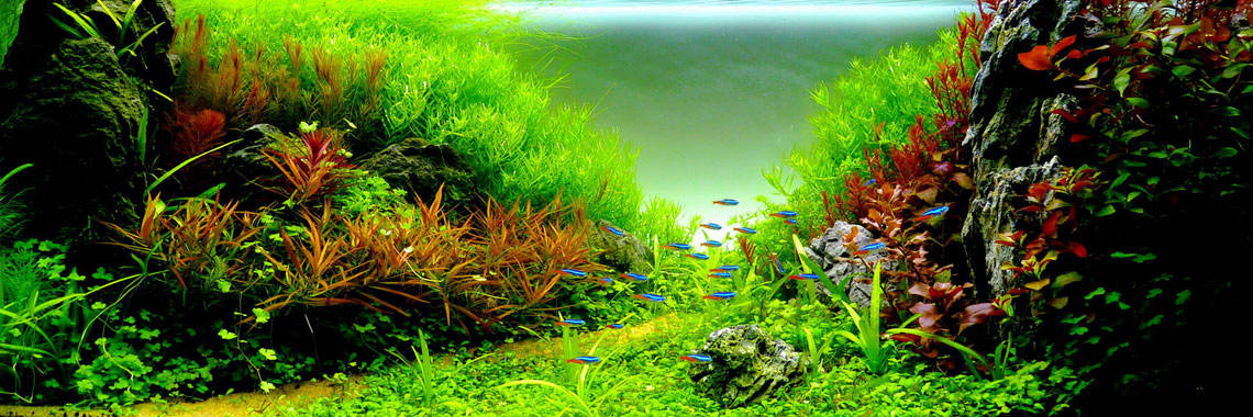 image of live aquarium plants