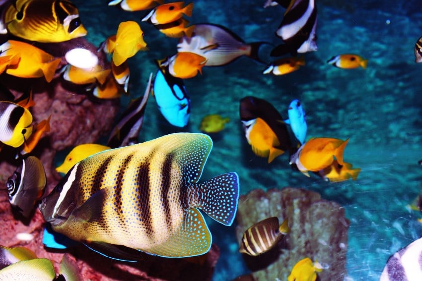 image of tropical fish