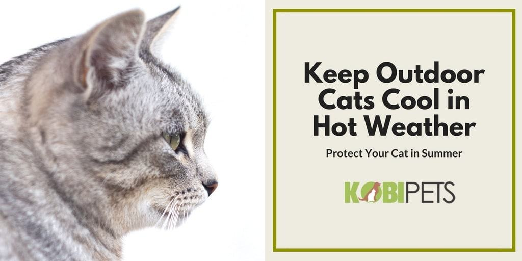 keep outdoor cats cool in hot weather - featured image