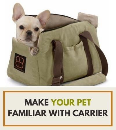 make your pet familiar with carrier