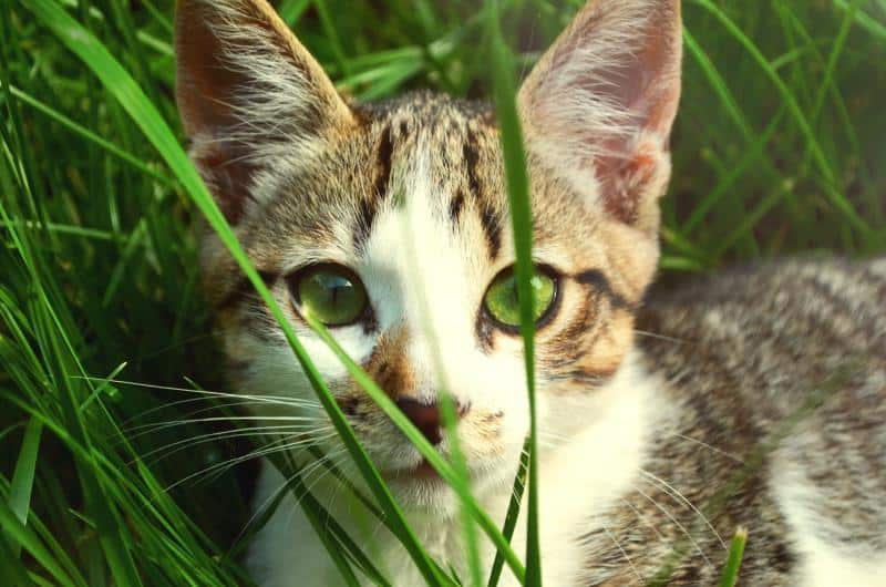 outdoor cat with beautiful green eyes