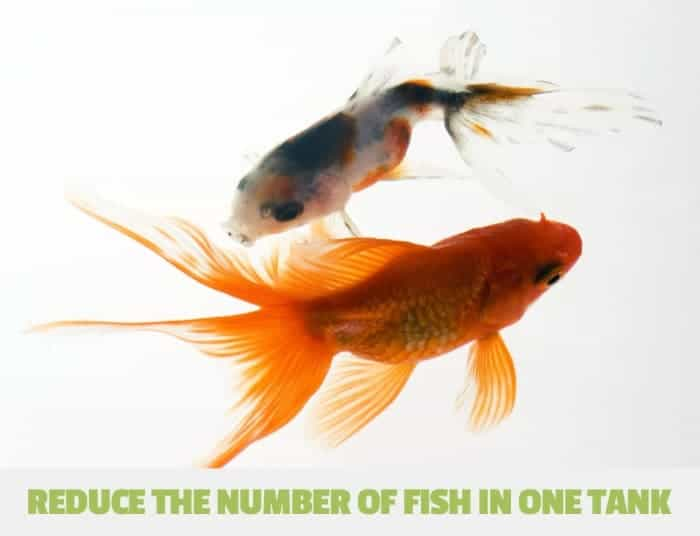 reducing the number of fish in one tank to lower nitrates