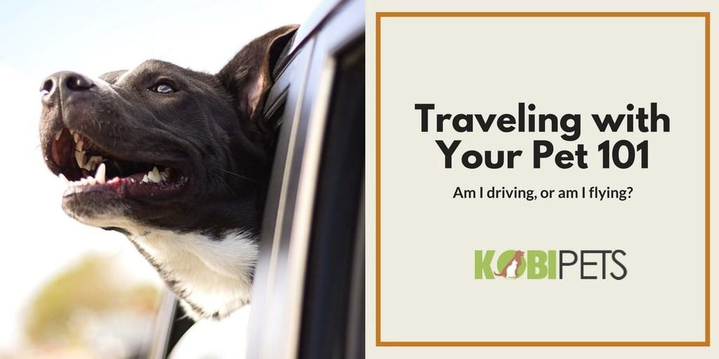 traveling with your pet - Featured Image