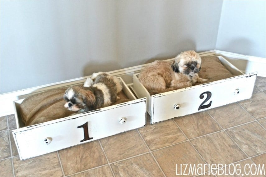 image of: drawer dog bed