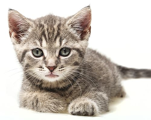 image-of-a-cute-kitten