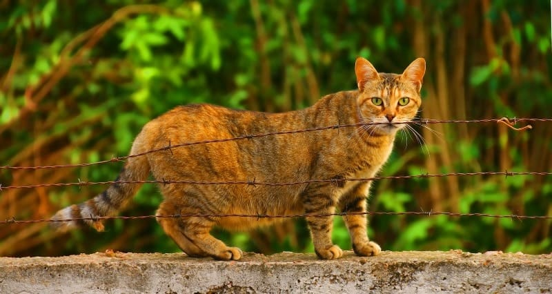 image of a pregnant cat standing on the wall