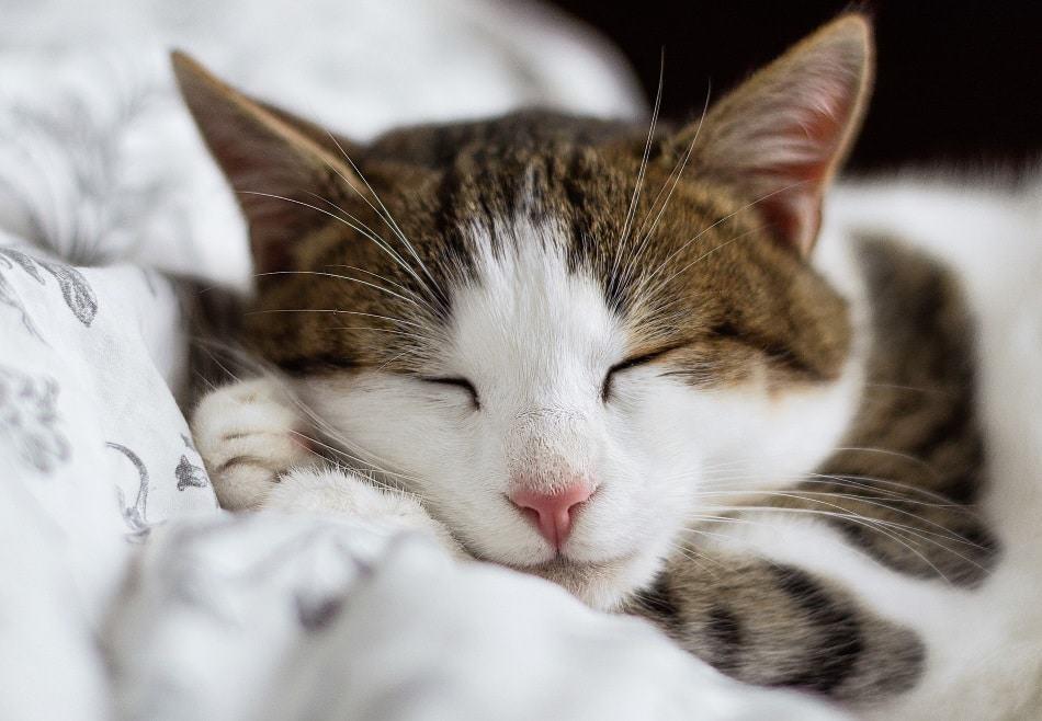 image of cat nesting