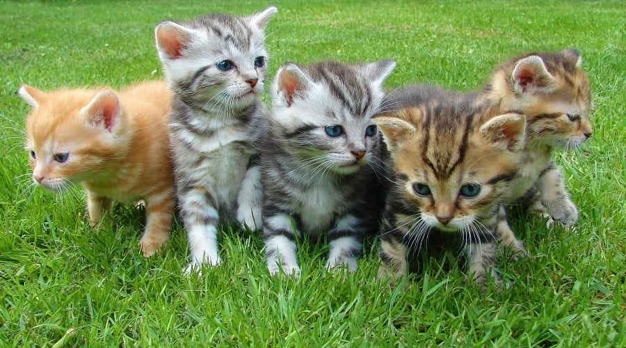 image of five cute kittens standing on the grass