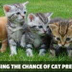Things You Can Do to Improve the Chance of Cat Pregnancy