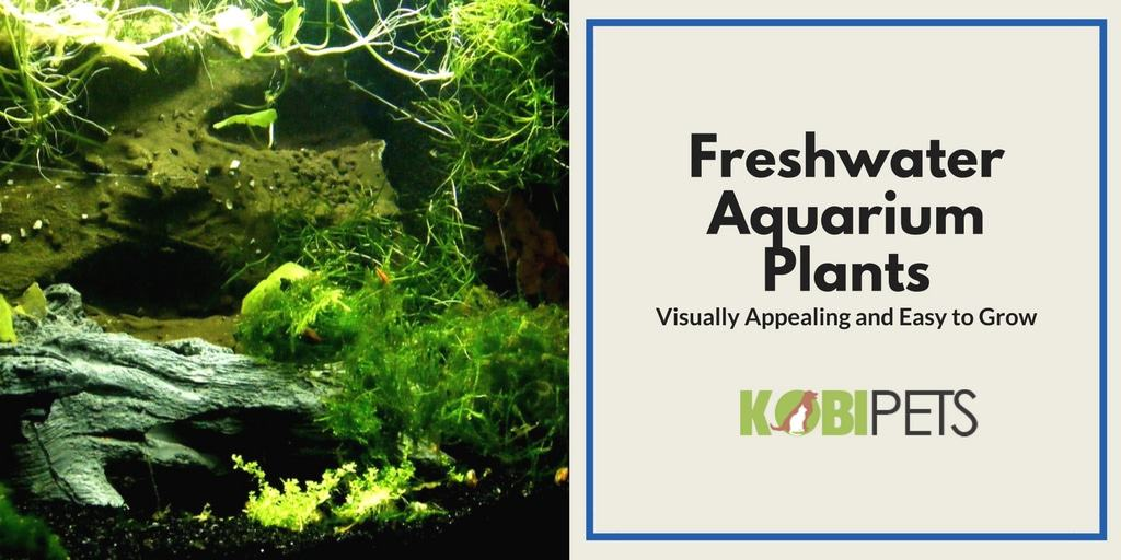 Fast and Easy to Grow Freshwater Aquarium Plants - Featured