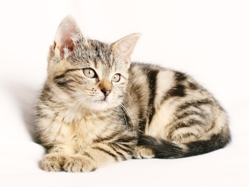 image of a cat on the white background