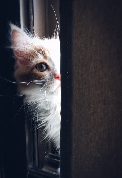 kitty peeking through curtains