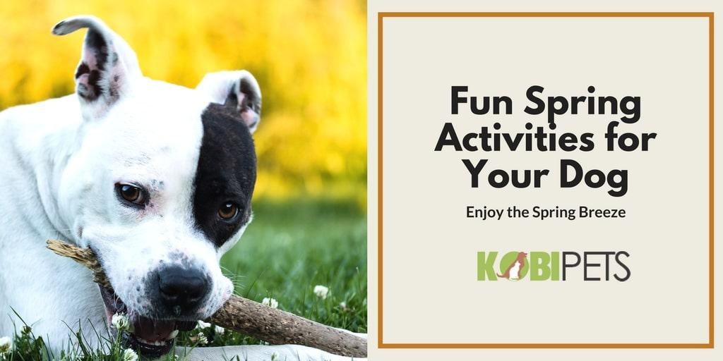 fun spring activities for your dog - Featured Image