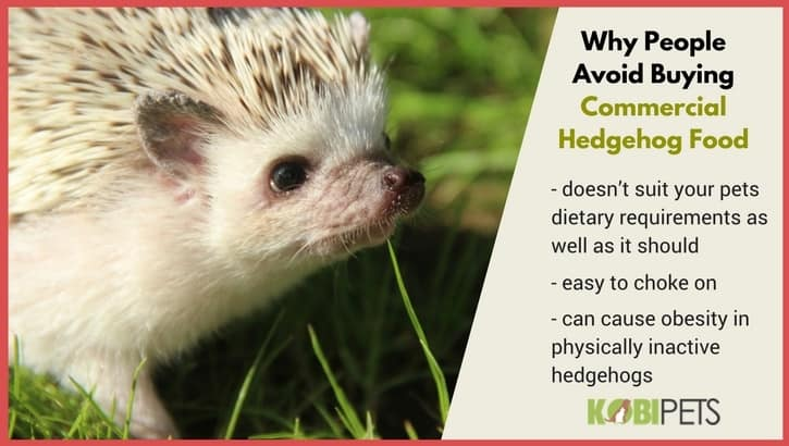 Why People Avoid Buying Commercial Hedgehog Food