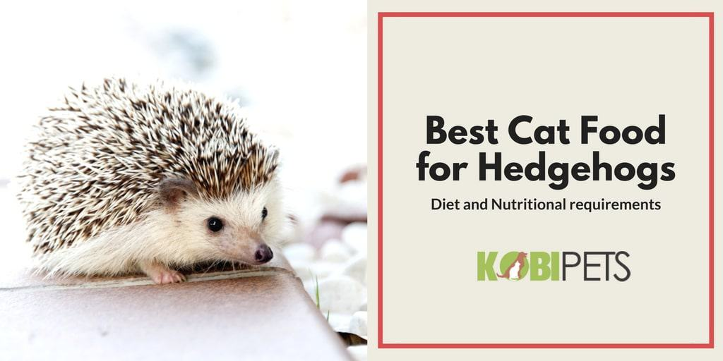 Best Food To Feed A Hedgehog