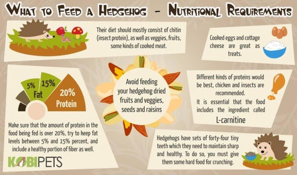 Best Cat Food For Hedgehogs Hedgehog Food And Diet Kobi Pets