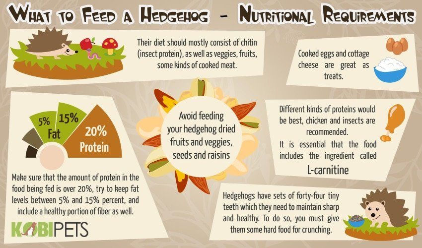 what-to-feed-a-hedgehog