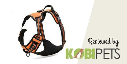 chais-choice-dog-harness-review
