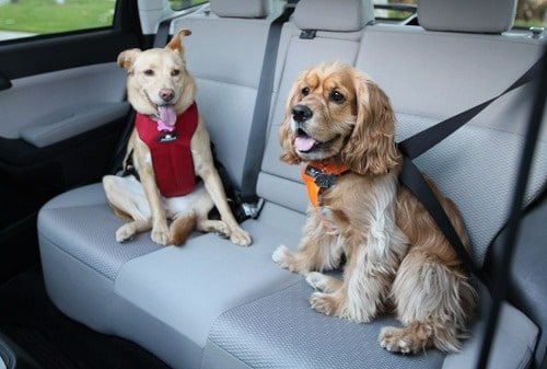 dog seat belts