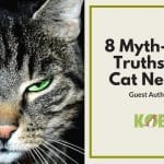 truths about cat neutering