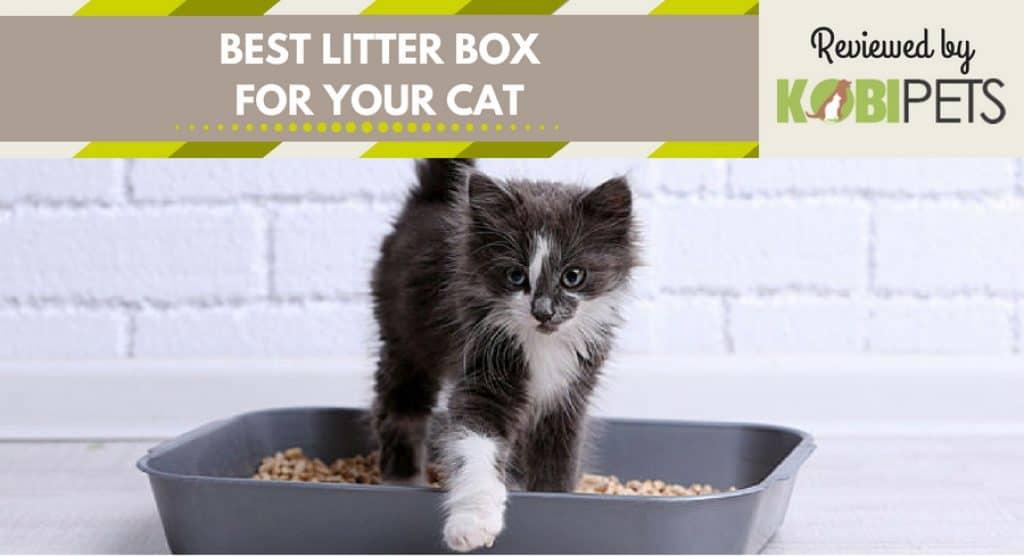 Best Cat Litter Box Reviews And Comparison 2018 Kobi Pets