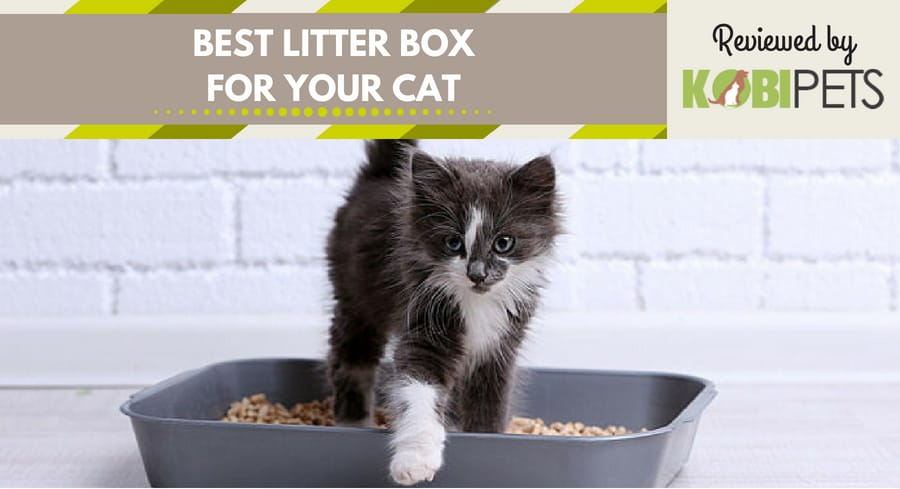 best cat litter box - featured img