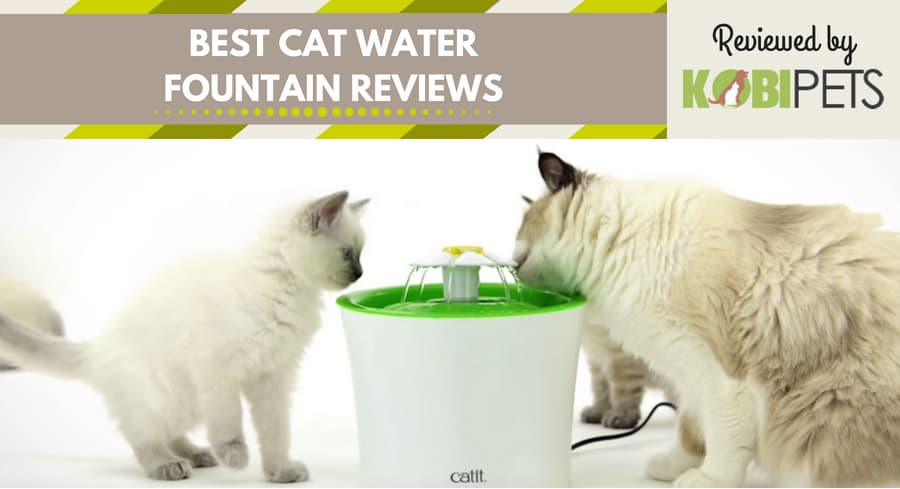 best cat water fountain reviews - featured img