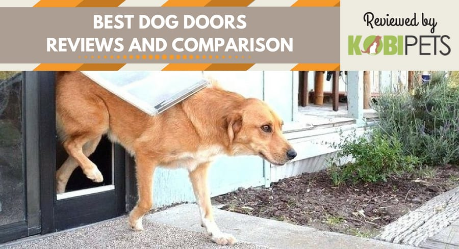 best dog door reviews - featured img