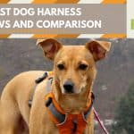 best dog harness reviews - featured img