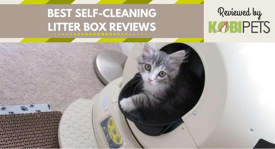 best self cleaning litter box reviews - featured img