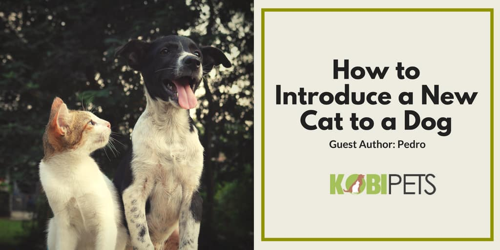 how to Introduce a new cat to a family dog - featured image