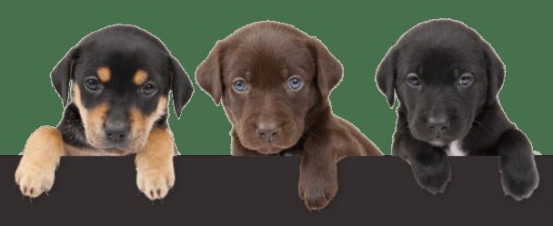 mailing list - kobi pets