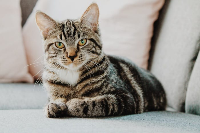 image of a cat sitting on the sofa